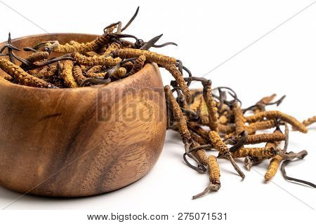 Close Up Cordycep Sinensis (chong Cao) Or Mushroom Cordyceps On Wooden Bowl On Isolated Background.