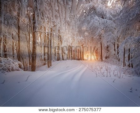 Winter Forest Covered With Frost
