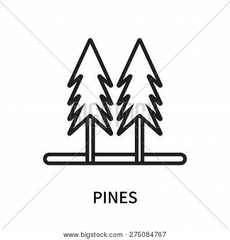 Pines Icon Isolated On White Background. Pines Icon Simple Sign. Pines Icon Trendy And Modern Symbol