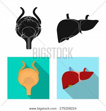 Vector Design Of Body And Human Icon. Set Of Body And Medical Stock Vector Illustration.