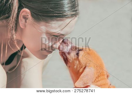 Young Attractive Caucasian Woman Leans Down Towards Cute Red Puppy, Puppy Leaks Her In Nose. Outdoor