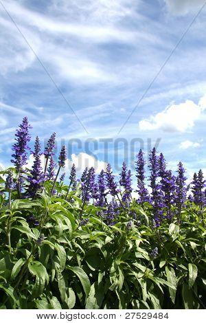 Flowers in summer season
