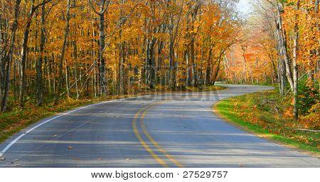 Autumn landscape -Road through forest