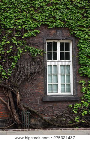 Window Of The Old House On The Wall Overgrown With Plants