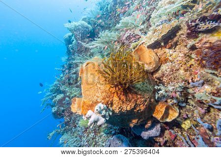 Coral Reef Off The Oast Of Bali In Summer
