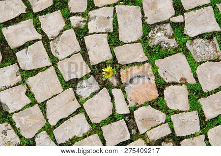 Small Yellow Flower Growing Between Street Tiles. Hope, Life Struggle And Rebirth Concept. Grow Plan