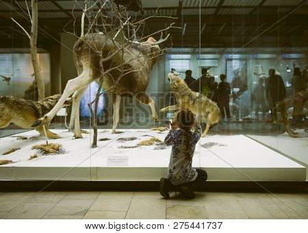 Moscow, Russia - November 04, 2018: State Darwin Museum: Portrait Of Curiosity Child In A Museum. Tr