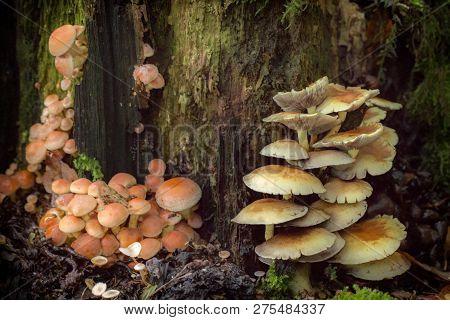 Mushrooms Toadstools. Bright Small Poisonous Mushrooms Toadstool Group Psilocybin