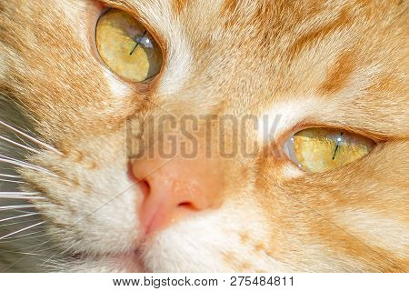 Cat Pictures, Cat Eyes, Pictures Of The Most Beautiful Cat Eyes, Cute Cat, Innocent Cat Pictures, Cl