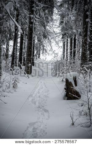 Frozen Winter Forest With Snow And Zig Zag Trail Near Cubonov Hill In Moravskoslezske Beskydy Mounta