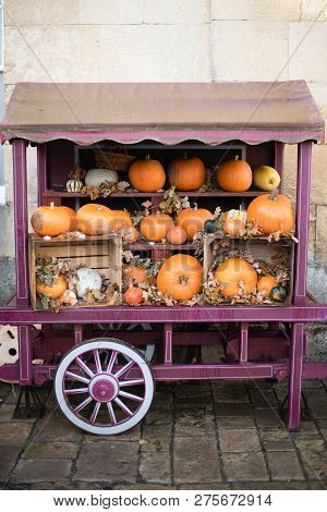 Pretty Display Of Pumpkins In A Purple Covered Wagon At Haloween Time