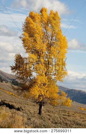 This Lone Tree Reaching Towards The Partly Cloudy Sky Emphasizes The Steepness Of The Hillside