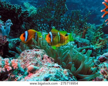 Underwater Shooting. Coral Reef And Its Inhabitants