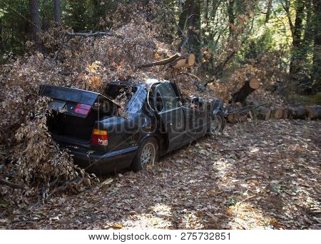 Car Crushed By A Tree That Was Cut Down Carelessly