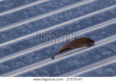 Dead Leaf Corrugated Iron Roof