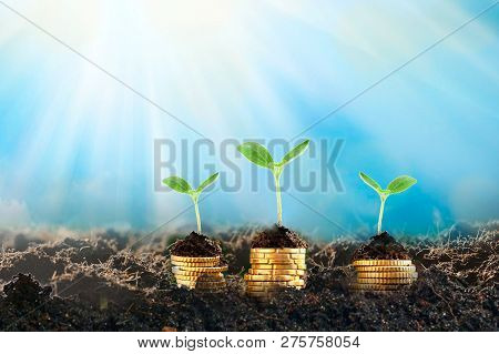Growing Plant On Row Of Coin Money , Csr In Business.