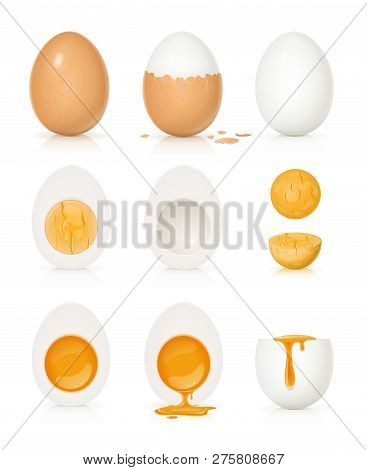 Set Of Eggs With Yolk And Shell. Product For Cooking Breakfast. Boiled Egg. Organic Food. View Reali