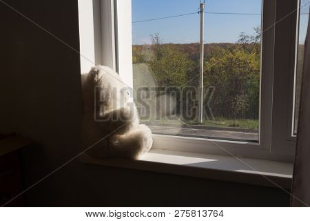 White bear sits on the windowsill and looks out the window, waiting. present. sad childhood.The sad teddy bear sits on the windowsill and looks sadly out the window, its raining, the glass is covered with drops poster