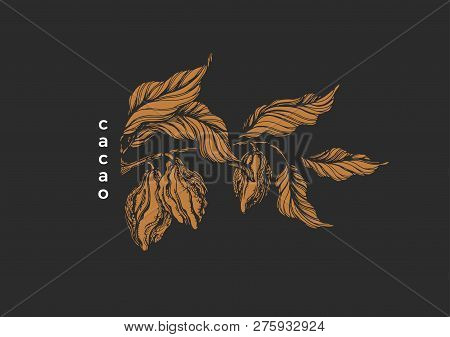 Vector Graphic Symbol Chocolate Nature Illustration Tropical Cacao Tree, Branch, Leaf, Bean, Fruit N