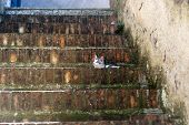 Sovana (Grosseto Tuscany Italy) cat on a staircase poster