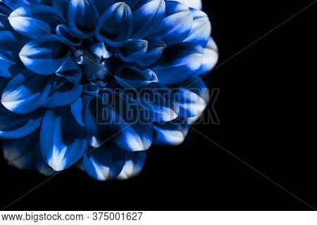 Classic Blue Trend Color Of 2020 Year Flower Bud Cropped Frame On Isolated Black.