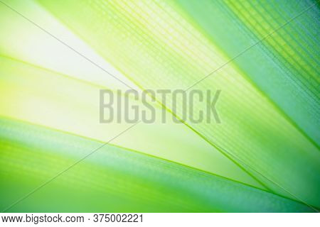 Green Leaf Nature On Blurred Greenery Background. Beautiful Leaf Texture In Sunlight. Natural Backgr