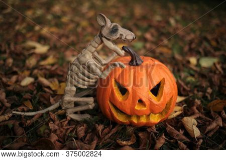 Halloween . Pumpkin Jack And Spooky Rat Skeleton On The Background Of Autumn Foliage.autumn Holidays
