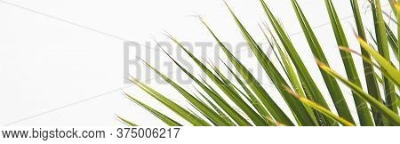 Close Up Of Fan Palm Leaf In Detail, Lines And Textures Of Green Palm Leaves, Copy Space, Summer Tro