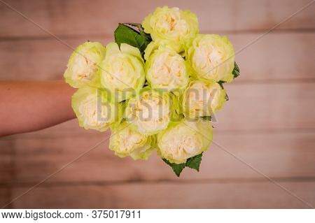Woman Hand Holding A Bouquet Of Moonstone Garden Roses Variety, Studio Shot, White Flowers