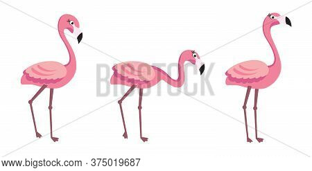 Flamingo - Trendy Vector Illustration Template In Flat Style With Flamingos
