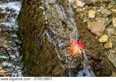 Red And Orange Single Japanese Maple Leaf Lying In The Pond In The Water In Kenroku-en Park In Kanaz