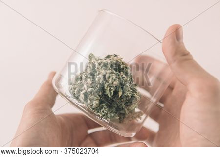 The Sugar Pot Leaves On Buds. Mans Hands Marijuana Bud. Cannabis Buds In Glass Jar. White Background
