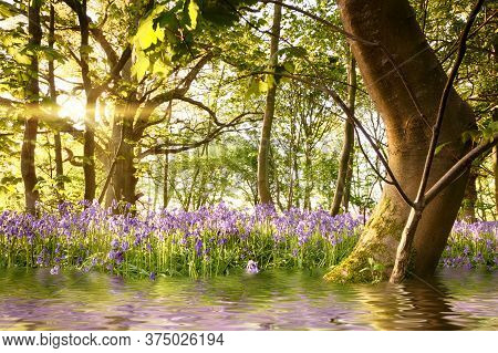 Bluebell Forest With Water Reflections And Bent Tree During Sunrise. Magical Landscape In A Beautifu