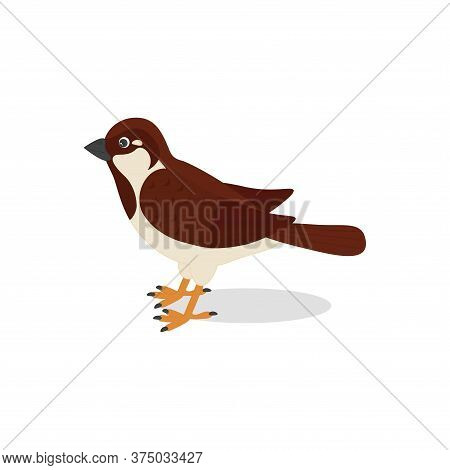 Cute Sparrow, Isolated On White Background. Bird Icon. Vector Illustration