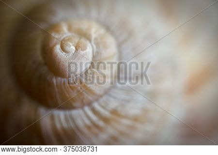 Close-up Of An Empty Snail Shell On A Table