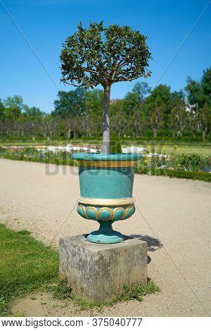 Laurel Tree In A Public Park In Berlin On A Footpath