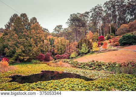 Pond With Water Lilies In Mount Lofty Botanic Garden During Autumn, Adelaide Hills, South Australia