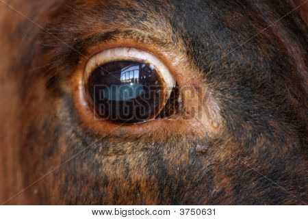 Detailed close-up of a cow's eye view of life poster