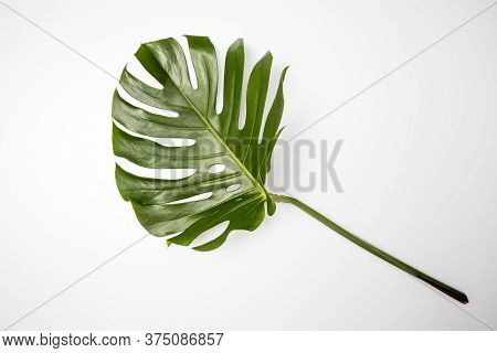 Natural Green Fresh Monstera Leaves Border Frame On White Abstract Background Isolated. Room For Tex