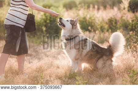 Loyal dog with girl while walking on sunny nature