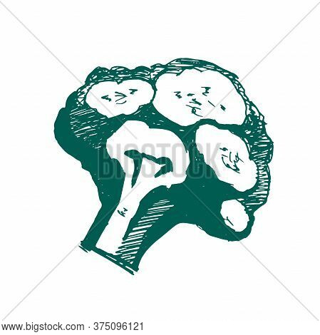 Broccoli Logo. Broccoli - Stylized Icon In A Flat Style. Green Vegetable