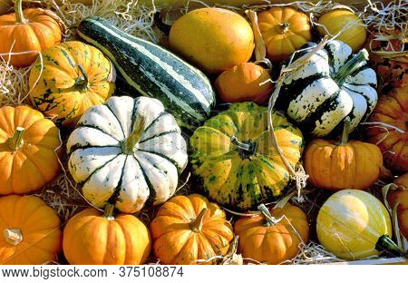 Different Marrows And Squashes, Pumpkins, For Sale At A Farmers Market In France