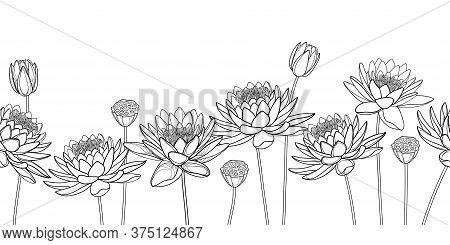 Vector Horizontal Seamless Pattern With Outline Lotos Or Water Lily Flower, Bud And Seed Pod In Blac