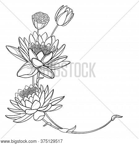 Vector Corner Bouquet Of Outline Ornate Lotos Or Water Lily Flower, Bud And Seed Pod In Black Isolat