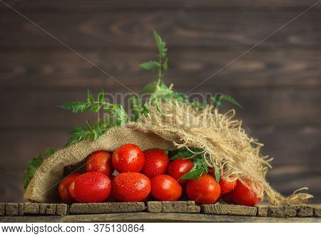 Fresh Organic Juicy Tomatoes In Burlap Bag. Tomatoes On Wooden Table