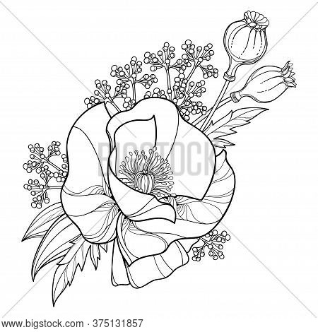 Vector Bouquet With Outline Poppy Flower, Leaves And Seed Pod In Black Isolated On White Background.