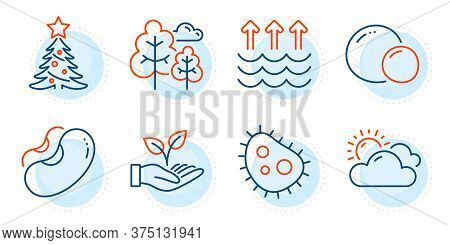 Sunny Weather, Christmas Tree And Peas Signs. Beans, Helping Hand And Tree Line Icons Set. Evaporati