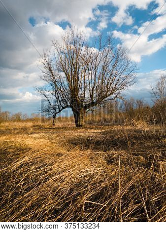 Scenic View Of A Dry Willow In A Parched Swamp With A Fallen Reed In Autumn During A Sunny Day With