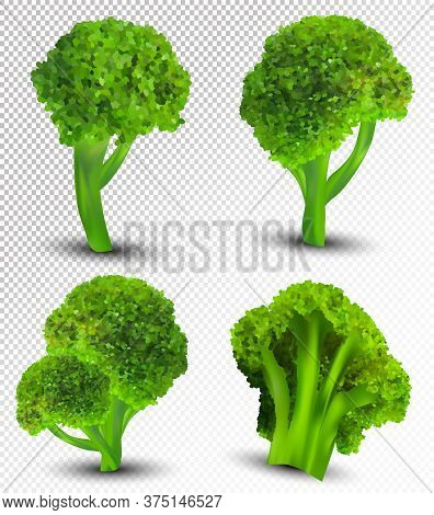 3d Realistic Broccoli. Collection Fresh Vegetables. Broccoli Cabbage On Transparent Background. Natu