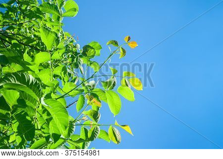 Tree Branches On A Background Of Blue Sky. Abstract Background With Space For Text. Template For Col